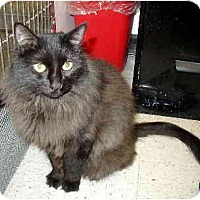 Adopt A Pet :: Lily - Scottsdale, AZ