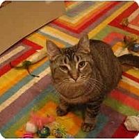 Adopt A Pet :: Amos--PETSMART - Muncie, IN