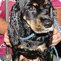 Adopt A Pet :: Ava Maria - Sugarland, TX