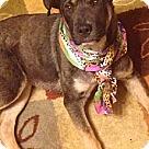 Adopt A Pet :: Easter