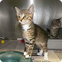 Adopt A Pet :: Annabelle - Dover, OH