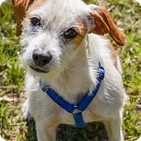 Adopt A Pet :: Joey - Conyers, GA