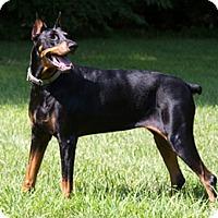 Adopt A Pet :: VIVA - Greensboro, NC