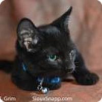 Adopt A Pet :: Pimiento - New Orleans, LA