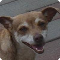Adopt A Pet :: Smoochie - MINNEAPOLIS, KS