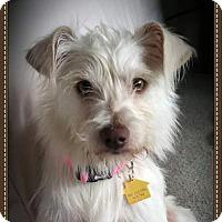 Adopt A Pet :: Bess - Santa Monica, CA