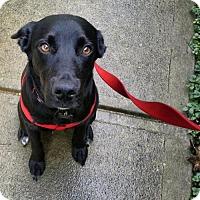 Adopt A Pet :: Maybelle - Arlington, VA