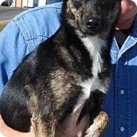 Adopt A Pet :: Maisey - Gainesville, FL