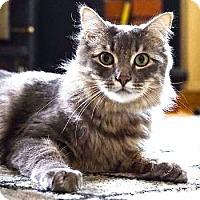 Adopt A Pet :: Gulliver - Davis, CA