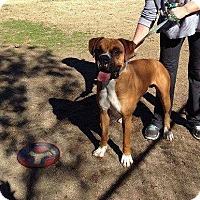 Adopt A Pet :: Petey - Woodinville, WA