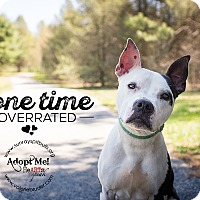 Adopt A Pet :: Tink - Medford, NJ