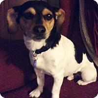 Adopt A Pet :: Wrigley - Schaumburg, IL