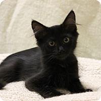 Adopt A Pet :: Ruger - Seminole, FL