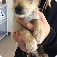 Adopt A Pet :: Quincy - Rancho Cucamonga, CA