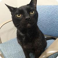 Adopt A Pet :: Elvis - Wayne, PA