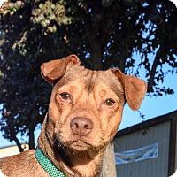 Adopt A Pet :: Rockford - Meridian, ID
