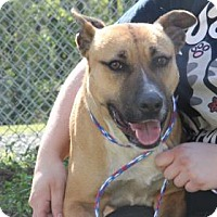 Adopt A Pet :: Kimber - Greensboro, NC