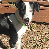 Adopt A Pet :: Abby - Mount Pleasant, SC
