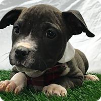 Adopt A Pet :: Pistachio - Trinidad, CO