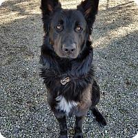 Adopt A Pet :: Oso - Lompoc, CA