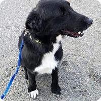 Adopt A Pet :: LEO - Gustine, CA