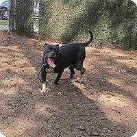 Terrier (Unknown Type, Medium) Mix Dog for adoption in Brookhaven, New York - Mitzy