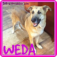 German Shepherd Dog Dog for adoption in White River Junction, Vermont - WEDA