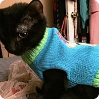 Adopt A Pet :: Duey - Houston, TX