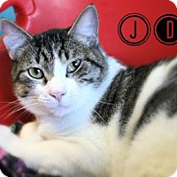 Adopt A Pet :: JD - West Des Moines, IA