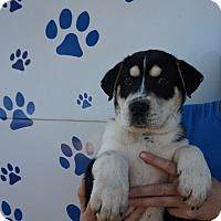 Adopt A Pet :: Tucker - Oviedo, FL
