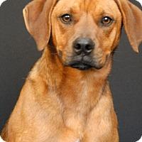 Adopt A Pet :: Renley - Newland, NC