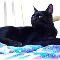 Adopt A Pet :: Spooky - Shelton, WA