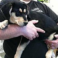 Adopt A Pet :: Pascua - Southampton, PA