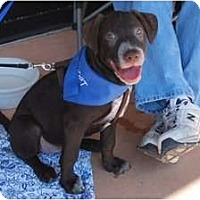 Adopt A Pet :: Hailey - Minneola, FL