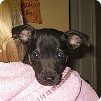 Adopt A Pet :: SMOKEY - Torrance, CA