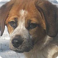 Adopt A Pet :: Ali - Jacksonville, FL