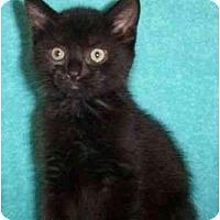 Adopt A Pet :: Yogi - Reston, VA