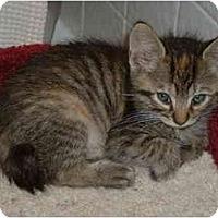 Adopt A Pet :: Dora - Davis, CA