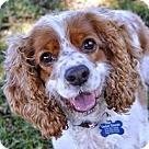 Adopt A Pet :: Angie
