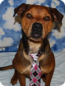 Hound (Unknown Type)/Shepherd (Unknown Type) Mix Dog for adoption in Waupaca, Wisconsin - Remy