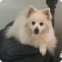 Adopt A Pet :: SYDNEY - Minnetonka, MN
