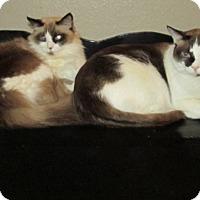 Adopt A Pet :: Sammy & Sophie - Gilbert, AZ