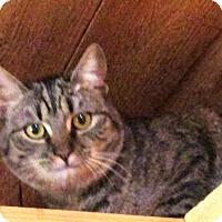 Adopt A Pet :: Ciggy - Witter, AR