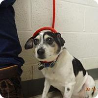 Adopt A Pet :: Sissy* - Gulfport, MS