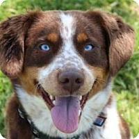 Adopt A Pet :: Paxton - Harmony, Glocester, RI