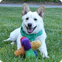 Adopt A Pet :: Chloe - Mocksville, NC