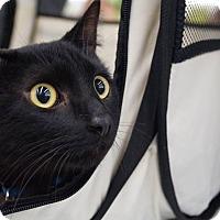 Adopt A Pet :: Batman - Elyria, OH