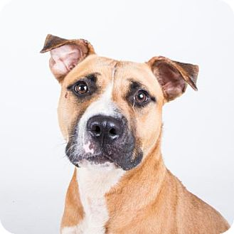 Boxer Mix Dog for adoption in Decatur, Georgia - Revayah