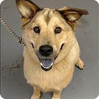 Adopt A Pet :: 16-08-2459a Emry - Dallas, GA