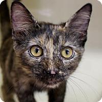 Adopt A Pet :: Stevie - Red Bluff, CA